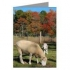 Fall Sheep Greeting Cards product image