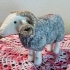 Herdwick Ram-Felted preview image