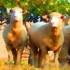 Polled Dorsets & Horned Ewe Notecard Set Preview Image