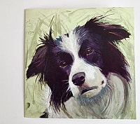 Border Collie Card Set product image