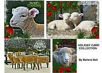 Holiday Sheep Card Collection product image