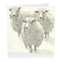 Mistletoe Sheep Christmas Cards product image