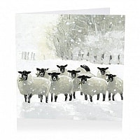 Suffolk Sheep Christmas Cards product image