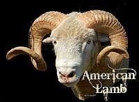 American Lamb Cards (Set of 20) product image