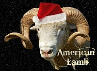 American Lamb Christmas Cards product image